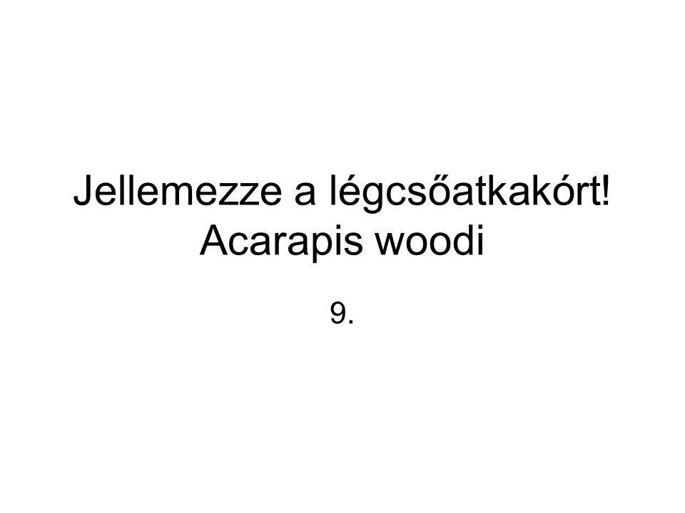 Jellemezze a légcsőatkakórt! Acarapis woodi 9.