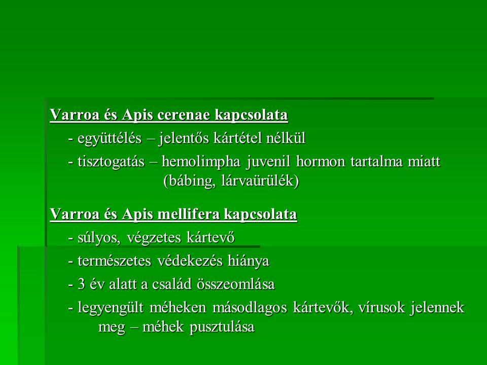 Varroa és Apis cerenae kapcsolata - együttélés – jelentős kártétel nélkül - tisztogatás – hemolimpha juvenil hormon tartalma miatt (bábing, lárvaürülé