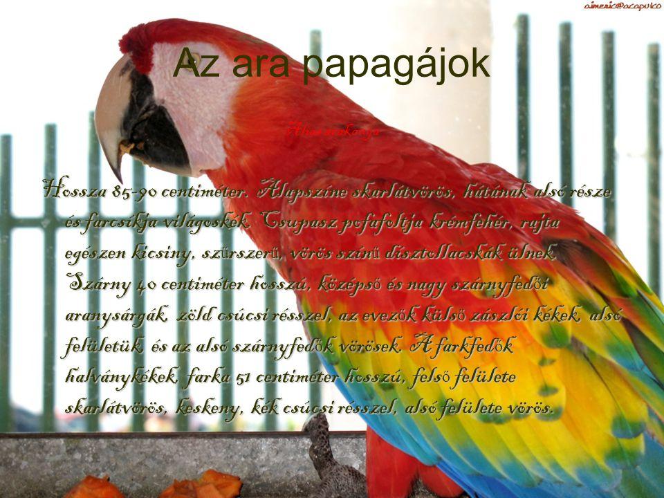 Papagájok Az ismertebb fajok…