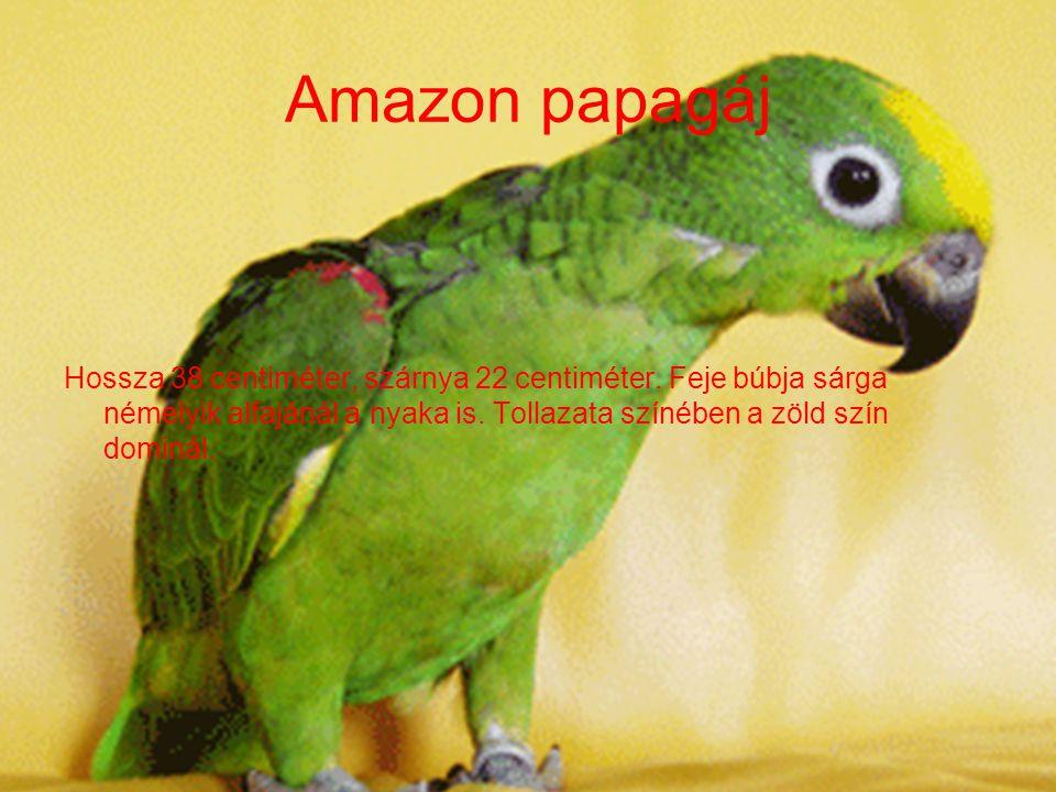 Az ara papagájok Alias arakanga Hossza 85-90 centiméter. Alapszíne skarlátvörös, hátának alsó része és farcsíkja világoskék. Csupasz pofafoltja krémfe