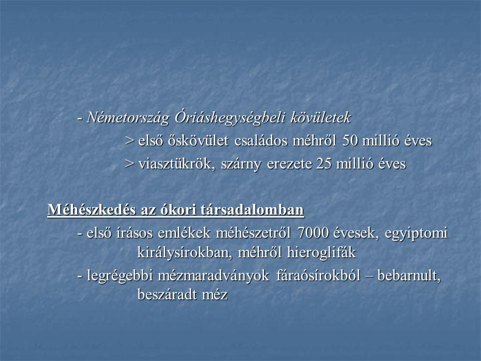 - Németország Óriáshegységbeli kövületek > első őskövület családos méhről 50 millió éves > viasztükrök, szárny erezete 25 millió éves Méhészkedés az ókori társadalomban - első írásos emlékek méhészetről 7000 évesek, egyiptomi királysírokban, méhről hieroglifák - első írásos emlékek méhészetről 7000 évesek, egyiptomi királysírokban, méhről hieroglifák - legrégebbi mézmaradványok fáraósírokból – bebarnult, beszáradt méz