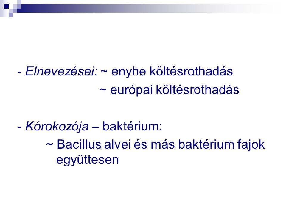- Elnevezései: ~ enyhe költésrothadás ~ európai költésrothadás - Kórokozója – baktérium: ~ Bacillus alvei és más baktérium fajok együttesen