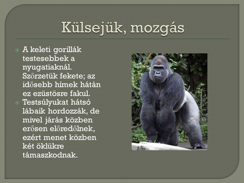  A gorillák az es ő erd ő kben, hegyi köderd ő kben élnek; akár 4000 méter magasságig is felhúzódnak.