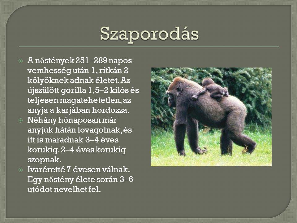  A n ő stények 251–289 napos vemhesség után 1, ritkán 2 kölyöknek adnak életet.