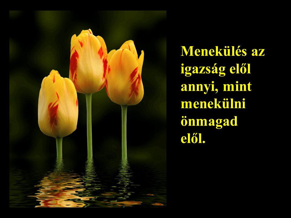 A legnagyobb bölcsesség a kedvesség.