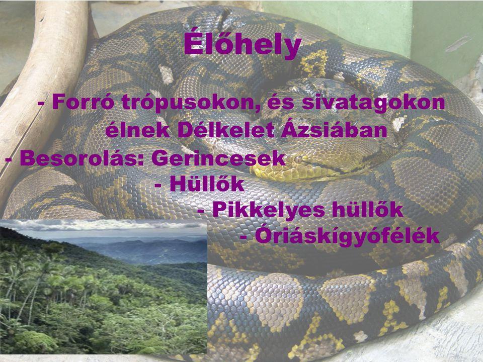 Testfelépítés leghosszabb óriáskígyófaj Hossza 15 méter, súlya 446 kg is lehet Testük hosszú és vékony, fejből és törzsből áll Csúszva mozognak, remekül úsznak Pikkelyes kültakarója, sárga, barna és zöld, színekben is látható Szemével jól lát