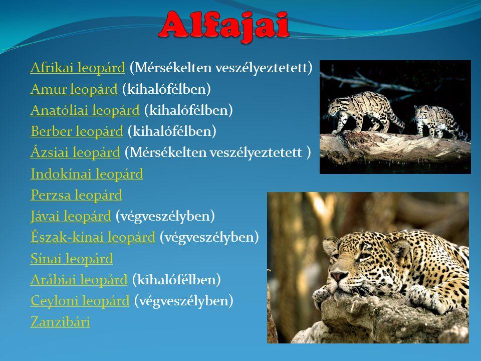 Afrikai leopárdAfrikai leopárd (Mérsékelten veszélyeztetett) Amur leopárdAmur leopárd (kihalófélben) Anatóliai leopárdAnatóliai leopárd (kihalófélben) Berber leopárdBerber leopárd (kihalófélben) Ázsiai leopárdÁzsiai leopárd (Mérsékelten veszélyeztetett ) Indokínai leopárd Perzsa leopárd Jávai leopárdJávai leopárd (végveszélyben) Észak-kínai leopárdÉszak-kínai leopárd (végveszélyben) Sínai leopárd Arábiai leopárdArábiai leopárd (kihalófélben) Ceyloni leopárdCeyloni leopárd (végveszélyben) Zanzibári