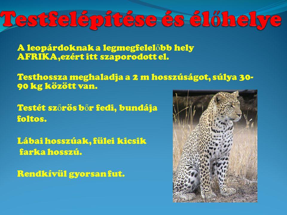A leopárdoknak a legmegfelel ő bb hely AFRIKA,ezért itt szaporodott el.