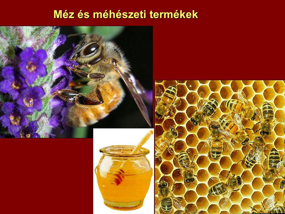 Méz és méhészeti termékek