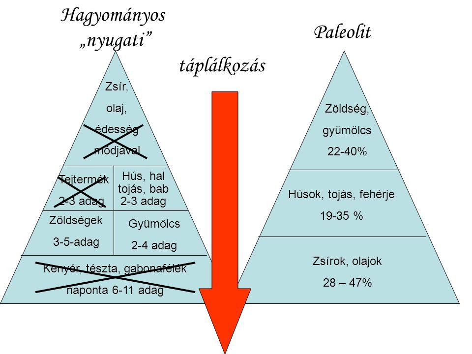 Végül a nyugati és a paleolit élelmiszer-piramis szerkezetének összefoglalása következik.