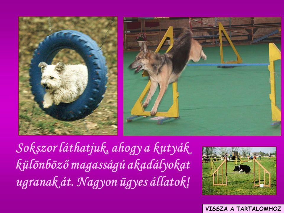 Sokszor láthatjuk, ahogy a kutyák különböző magasságú akadályokat ugranak át. Nagyon ügyes állatok! VISSZA A TARTALOMHOZ