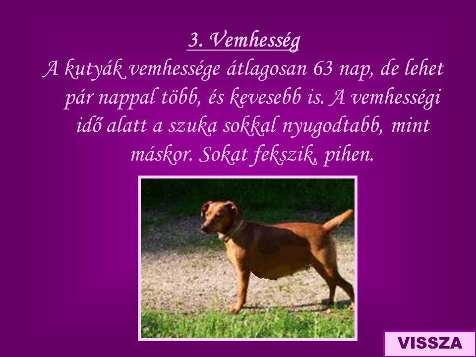 3. Vemhesség A kutyák vemhessége átlagosan 63 nap, de lehet pár nappal több, és kevesebb is. A vemhességi idő alatt a szuka sokkal nyugodtabb, mint má