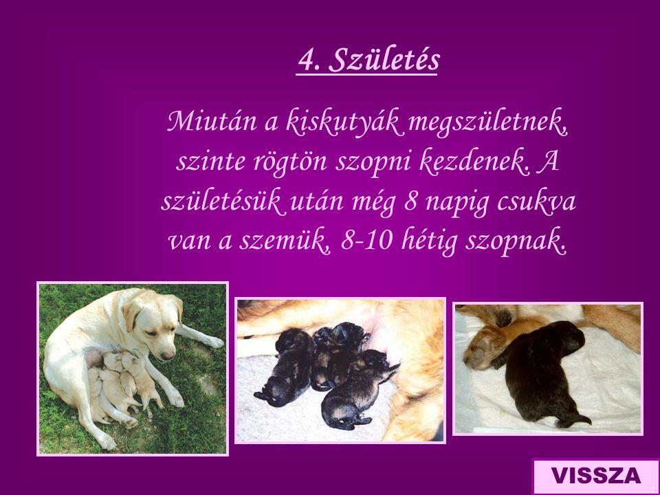4. Születés Miután a kiskutyák megszületnek, szinte rögtön szopni kezdenek. A születésük után még 8 napig csukva van a szemük, 8-10 hétig szopnak. VIS