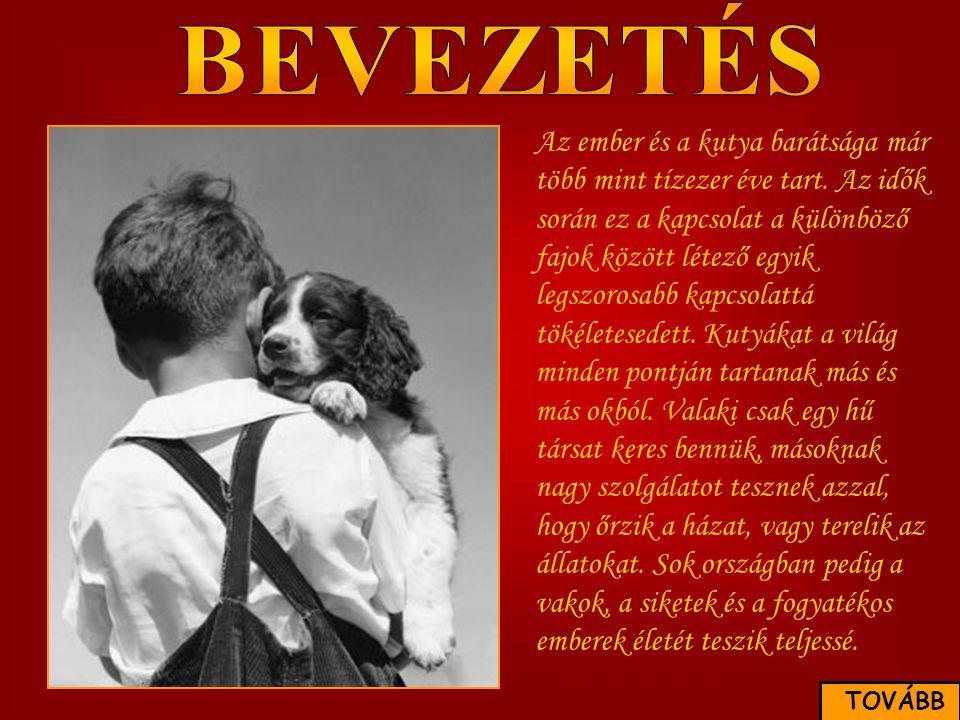 Az ember és a kutya barátsága már több mint tízezer éve tart. Az idők során ez a kapcsolat a különböző fajok között létező egyik legszorosabb kapcsola
