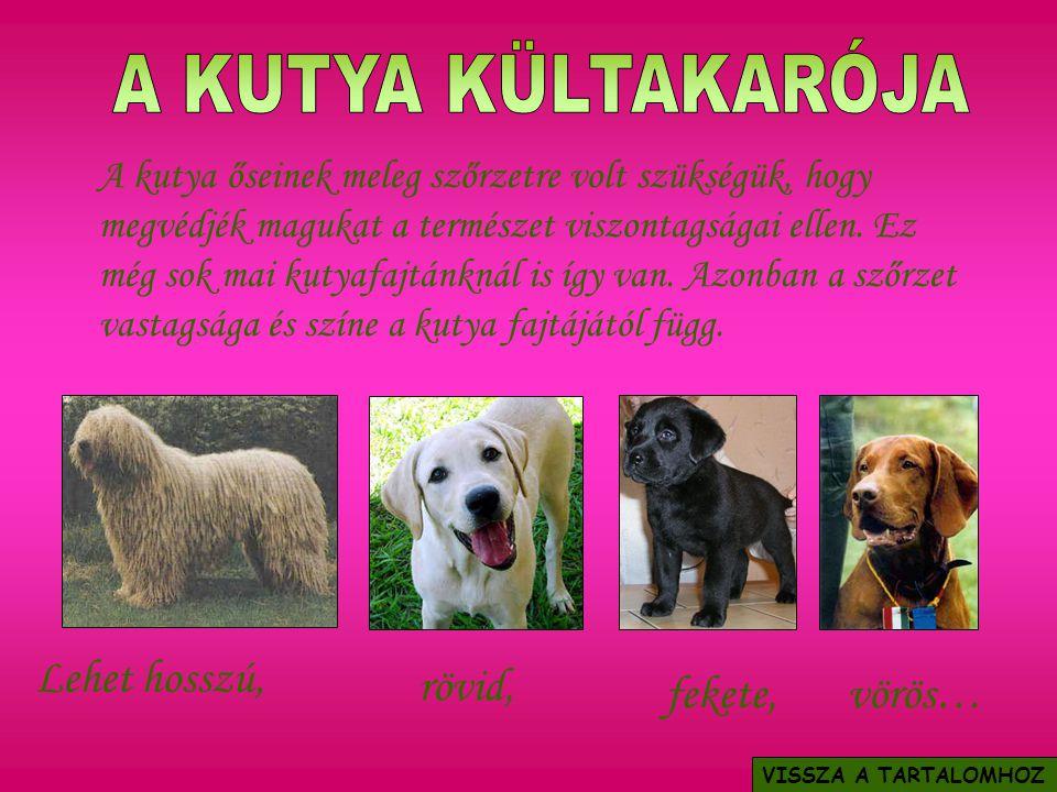A kutya őseinek meleg szőrzetre volt szükségük, hogy megvédjék magukat a természet viszontagságai ellen. Ez még sok mai kutyafajtánknál is így van. Az