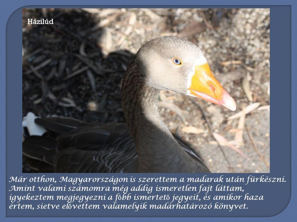Ausztrália, pontosabban Melbourne és környékének madárvilágával ismerkedem pár hónapja, s egy régi magyar mondás jut eszembe: Madarat tolláról, embert barátjáról lehet felismerni.