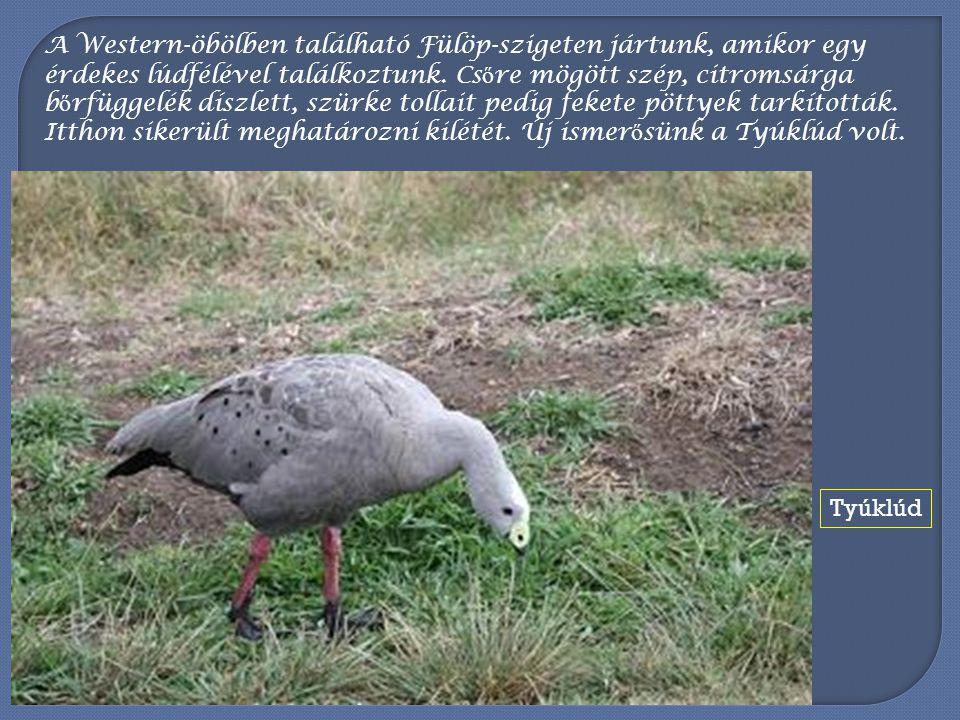 Különös madár az Es ő madár, mely a környékünkön csapatokban él.