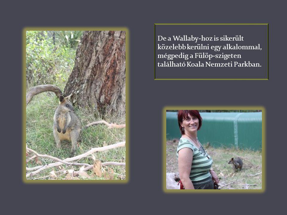 Későbbi sétáink során többször meglátogattuk a nagy kiterjedésű Plenty Gorge Nemzeti Parkot Whittlesea-ben, ahol az előbb említett kengurukat is láttu