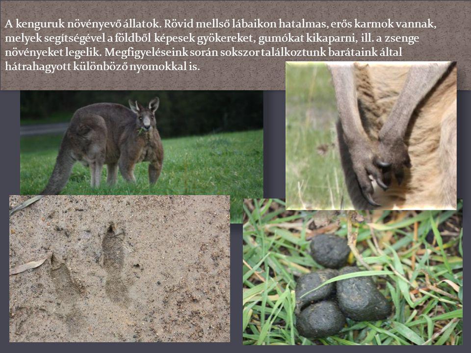 Amikor ugranak, hosszú, izmos lábaikkal lökik el magukat a talajtól, a farkukkal pedig ügyesen egyensúlyoznak. Testfelépítésük és izomzatuk a természe