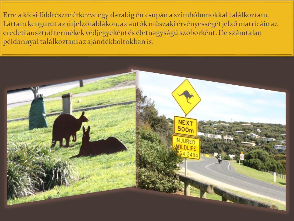 Ausztráliában sehol nincs kengurutenyésztés. Évente több millió példányt szervezett vadgazdálkodás keretében, engedéllyel rendelkező vadászok kilőhetn