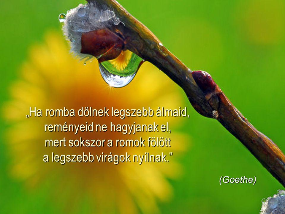 """""""Feledd a szomorúság perceit, de ne feledd el soha, amire azok tanítottak."""" (Vörösmarty Mihály)"""