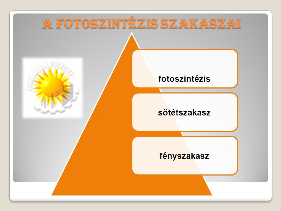 A fotoszintézis szakaszai fotoszintézis sötétszakaszfényszakasz
