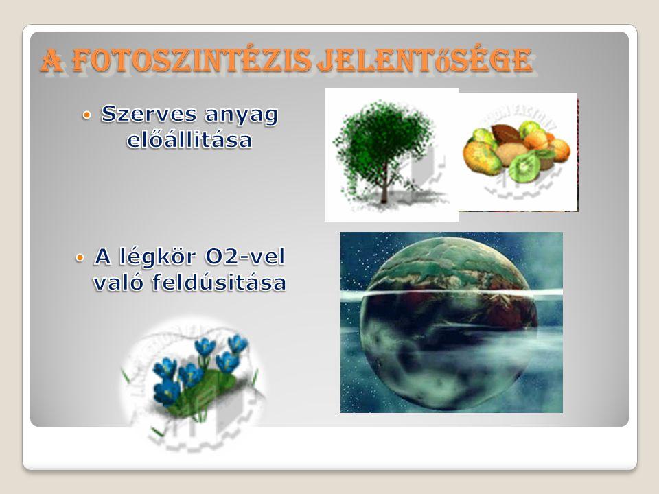 A fotoszintézis jelent ő sége