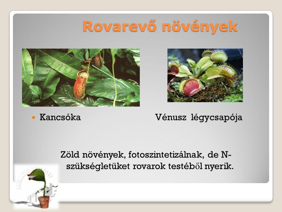 Heterotróf életmódú növényeink Heterotróf életmód Parazita Pl.