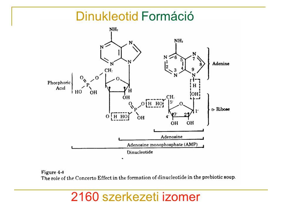 2160 szerkezeti izomer Dinukleotid Formáció