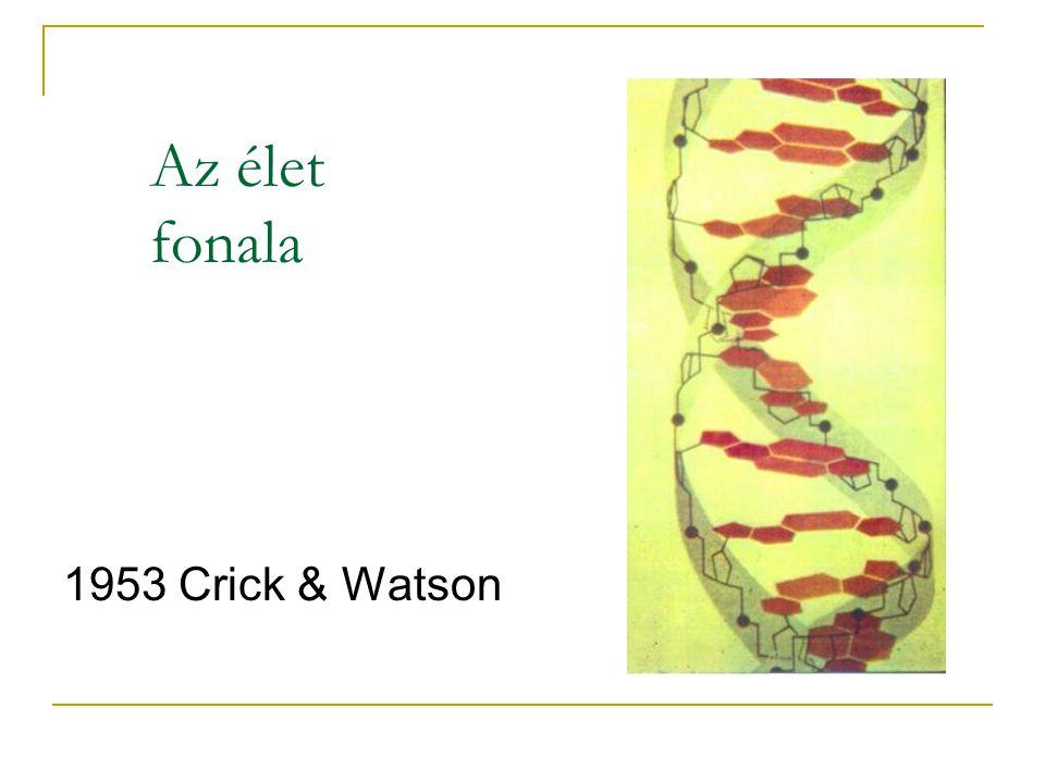 Információ: porszem a naturalisz- tikus elméletek gépezetében Komplexitás elmélet (Santa Fe Institute) RNS világ (Joyce and Orgel) Thioester világ (de Duve) Hidrotermikus szellőzők (Corliss) Először az anyagcsere (Wächtershäuser)