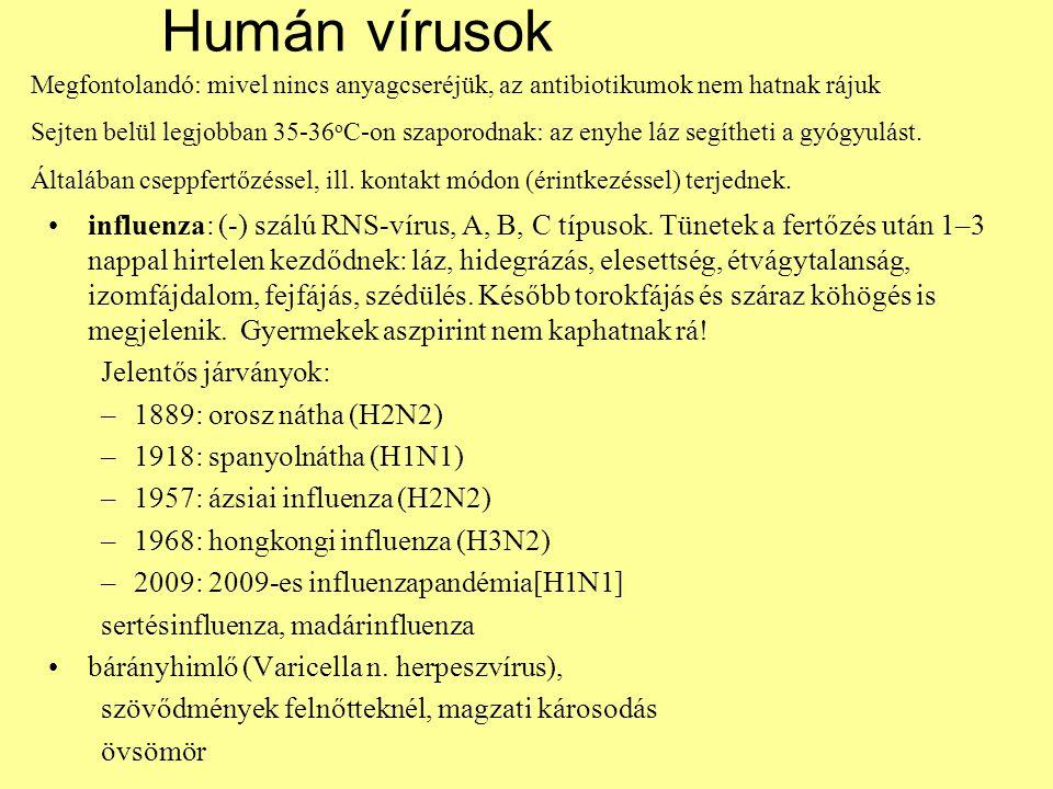 Humán vírusok influenza: (-) szálú RNS-vírus, A, B, C típusok. Tünetek a fertőzés után 1–3 nappal hirtelen kezdődnek: láz, hidegrázás, elesettség, étv