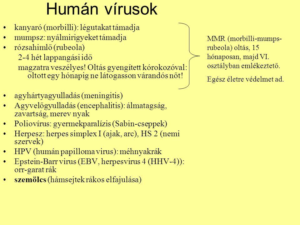 Humán vírusok kanyaró (morbilli): légutakat támadja mumpsz: nyálmirigyeket támadja rózsahimlő (rubeola) 2-4 hét lappangási idő magzatra veszélyes! Olt