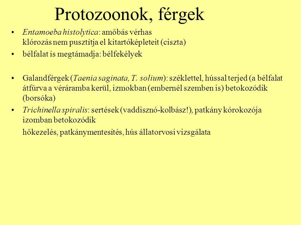 Protozoonok, férgek Entamoeba histolytica: amőbás vérhas klórozás nem pusztítja el kitartóképleteit (ciszta) bélfalat is megtámadja: bélfekélyek Galan