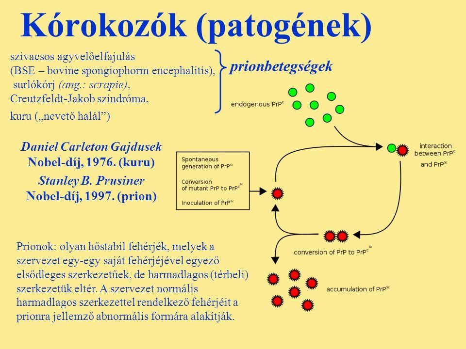 Kórokozók (patogének) Daniel Carleton Gajdusek Nobel-díj, 1976. (kuru) Stanley B. Prusiner Nobel-díj, 1997. (prion) szivacsos agyvelőelfajulás (BSE –
