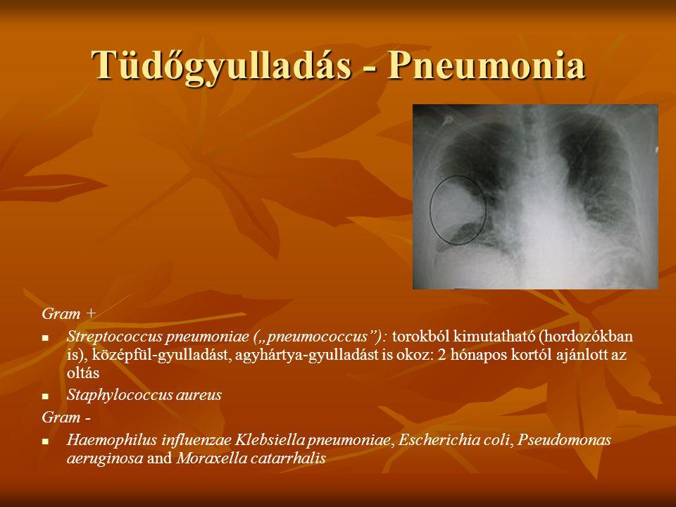 """Tüdőgyulladás - Pneumonia Gram + Streptococcus pneumoniae (""""pneumococcus""""): torokból kimutatható (hordozókban is), középfül-gyulladást, agyhártya-gyul"""