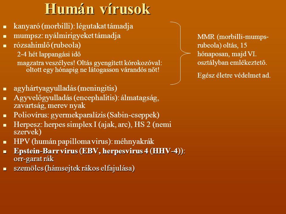 Humán vírusok Hepatitis (fertőző májgyulladás): A, E tápcsatornán (széklettel szennyezett étellel); B, C, D, egyéb: testnedvek, nemi út.