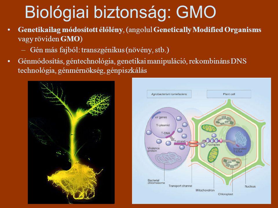 Biológiai biztonság: GMO Genetikailag módosított élőlény, (angolul Genetically Modified Organisms vagy röviden GMO) –Gén más fajból: transzgénikus (nö