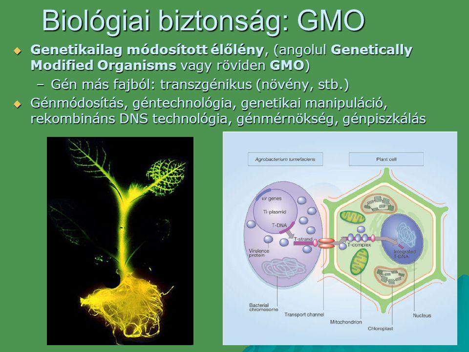 Biológiai biztonság: GMO  Genetikailag módosított élőlény, (angolul Genetically Modified Organisms vagy röviden GMO) –Gén más fajból: transzgénikus (