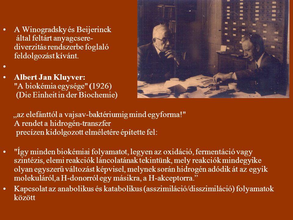 A Winogradsky és Beijerinck által feltárt anyagcsere- diverzitás rendszerbe foglaló feldolgozást kívánt. Albert Jan Kluyver: