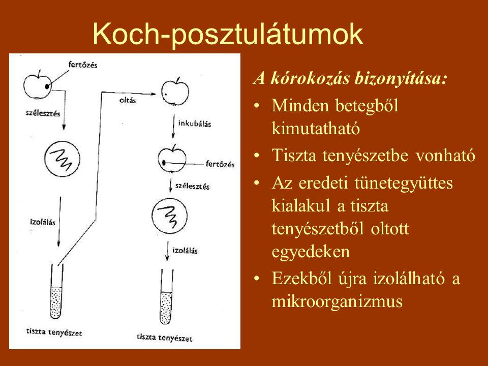 Koch-posztulátumok A kórokozás bizonyítása: Minden betegből kimutatható Tiszta tenyészetbe vonható Az eredeti tünetegyüttes kialakul a tiszta tenyésze