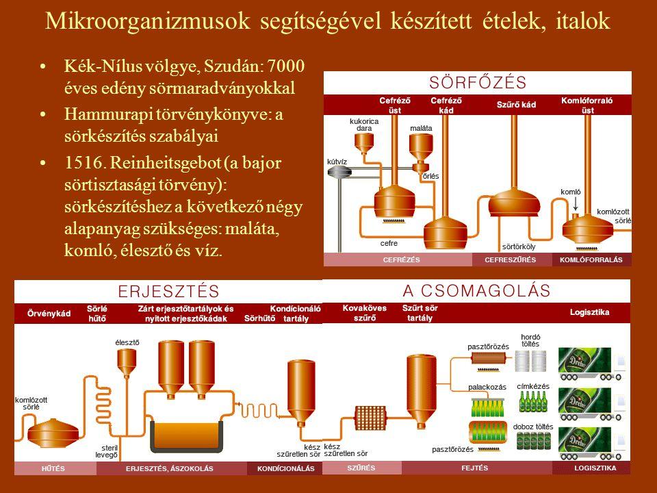 Mikroorganizmusok segítségével készített ételek, italok Kék-Nílus völgye, Szudán: 7000 éves edény sörmaradványokkal Hammurapi törvénykönyve: a sörkészítés szabályai 1516.