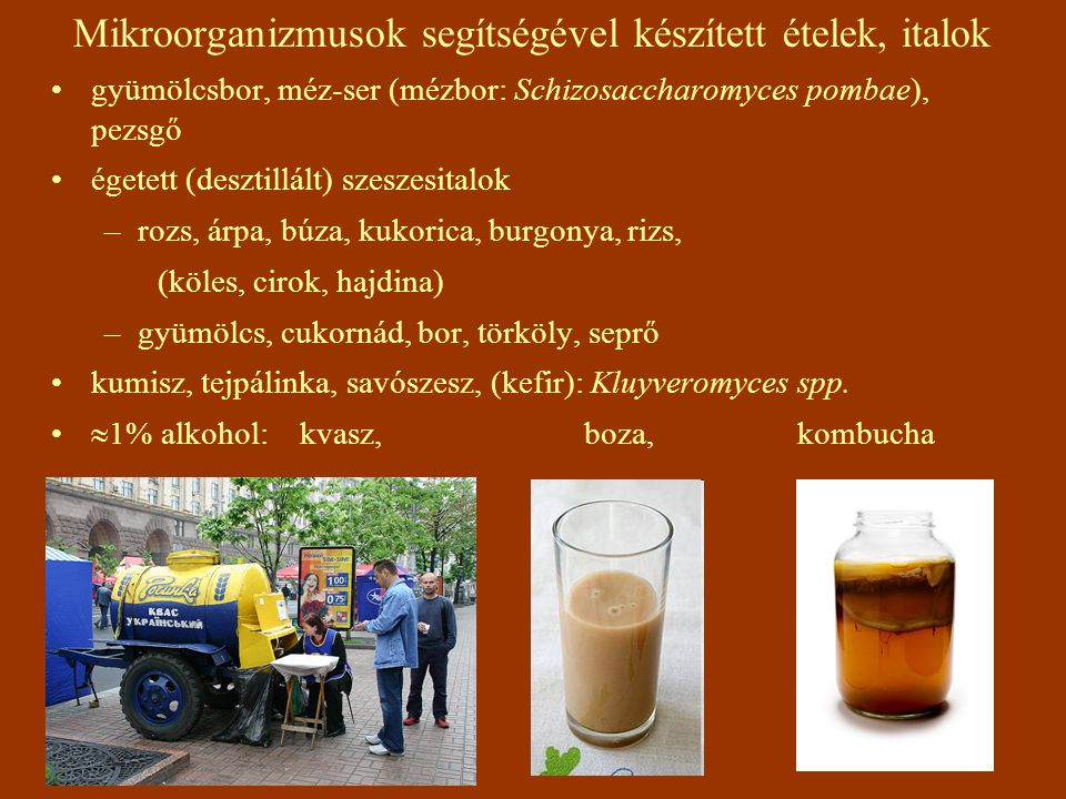 Mikroorganizmusok segítségével készített ételek, italok gyümölcsbor, méz-ser (mézbor: Schizosaccharomyces pombae), pezsgő égetett (desztillált) szesze