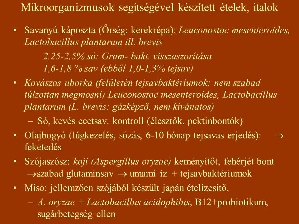 Mikroorganizmusok segítségével készített ételek, italok Savanyú káposzta (Őrség: kerekrépa): Leuconostoc mesenteroides, Lactobacillus plantarum ill.
