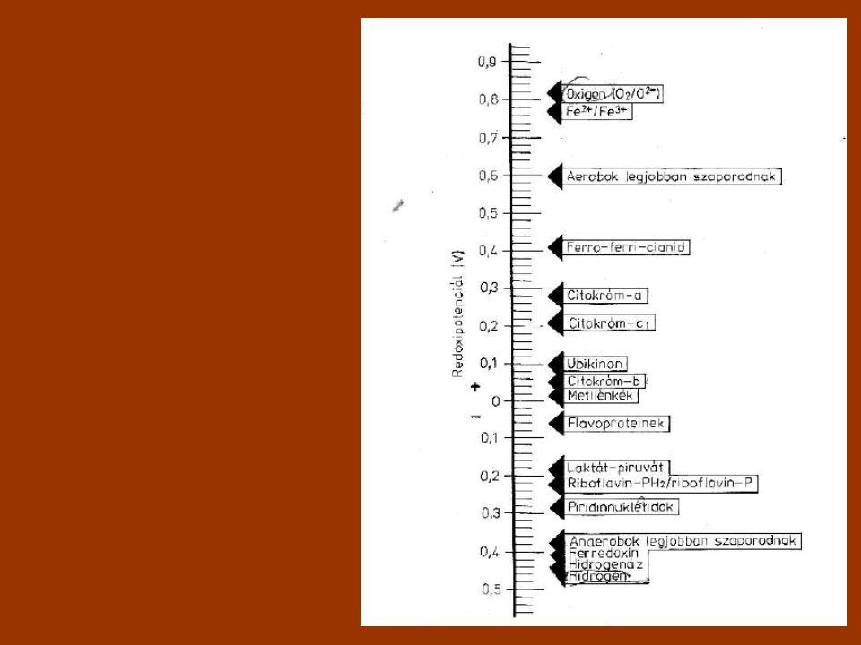 Redukálóképesség: NAD(P)H koenzim Nikotinamid-adenin-dinukleotid (-foszfát)