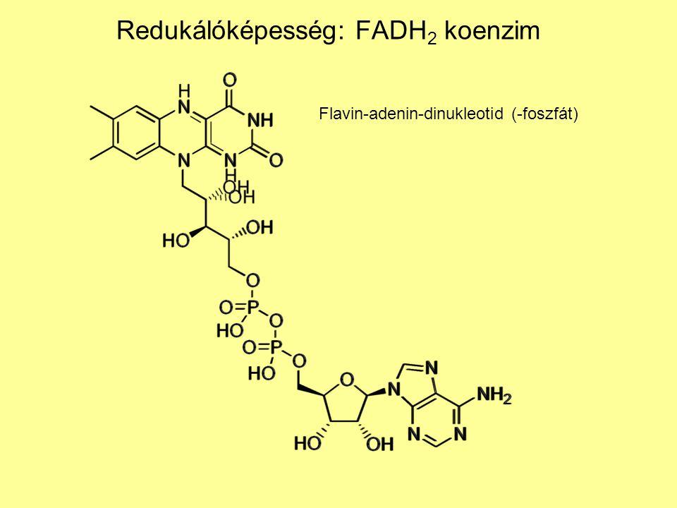 Redukálóképesség: FADH 2 koenzim Flavin-adenin-dinukleotid (-foszfát)