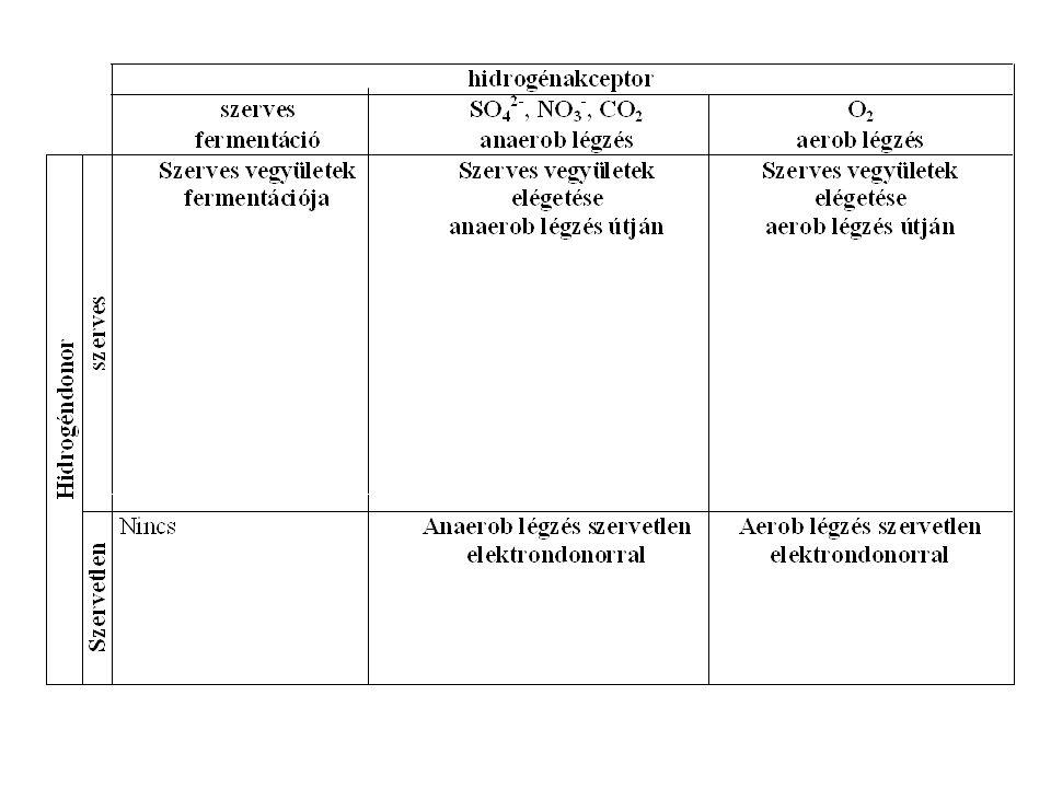 Glikolízis D-glükóz + 2 NAD + + 2 ADP + 2 P i + 2 NADH + 2 H + + 2 ATP + 2 H 2 O 2 piroszőlősav OH HO O - 2 NADH - 2 H + tejsav OH + CO 2 etanol stb.