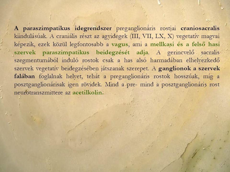 A paraszimpatikus idegrendszer preganglionáris rostjai craniosacralis kiindulásúak. A craniális részt az agyidegek (III, VII, LX, X) vegetatív magvai
