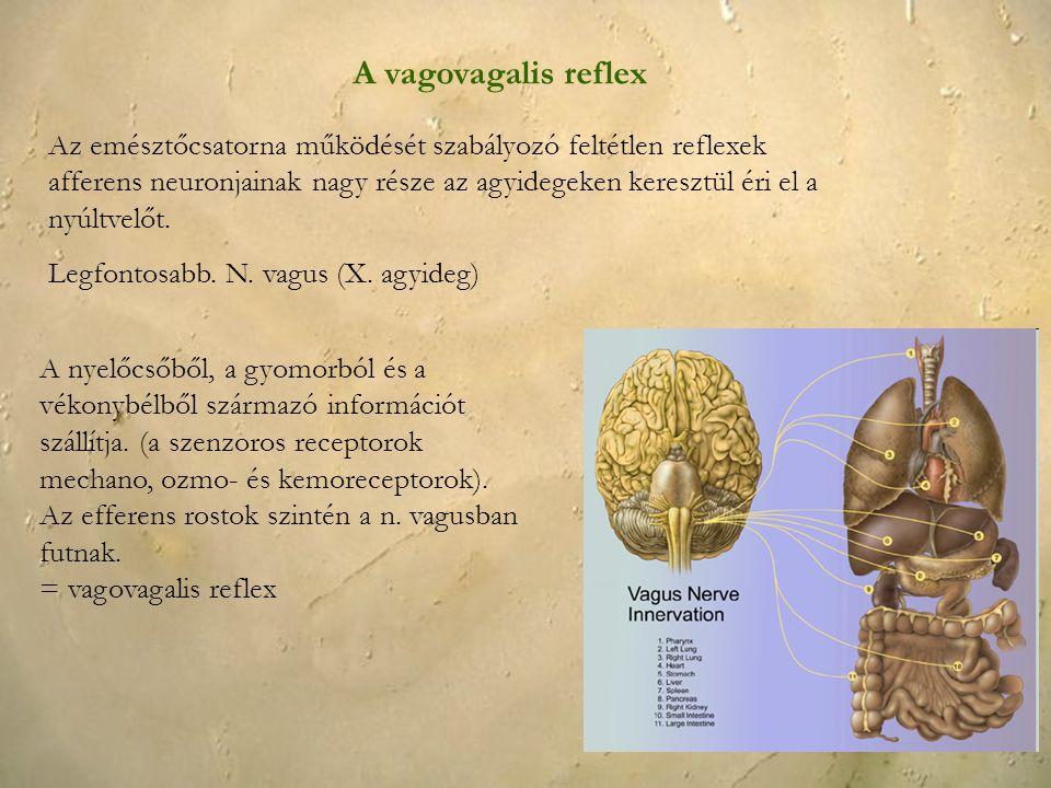 A vagovagalis reflex Az emésztőcsatorna működését szabályozó feltétlen reflexek afferens neuronjainak nagy része az agyidegeken keresztül éri el a nyú