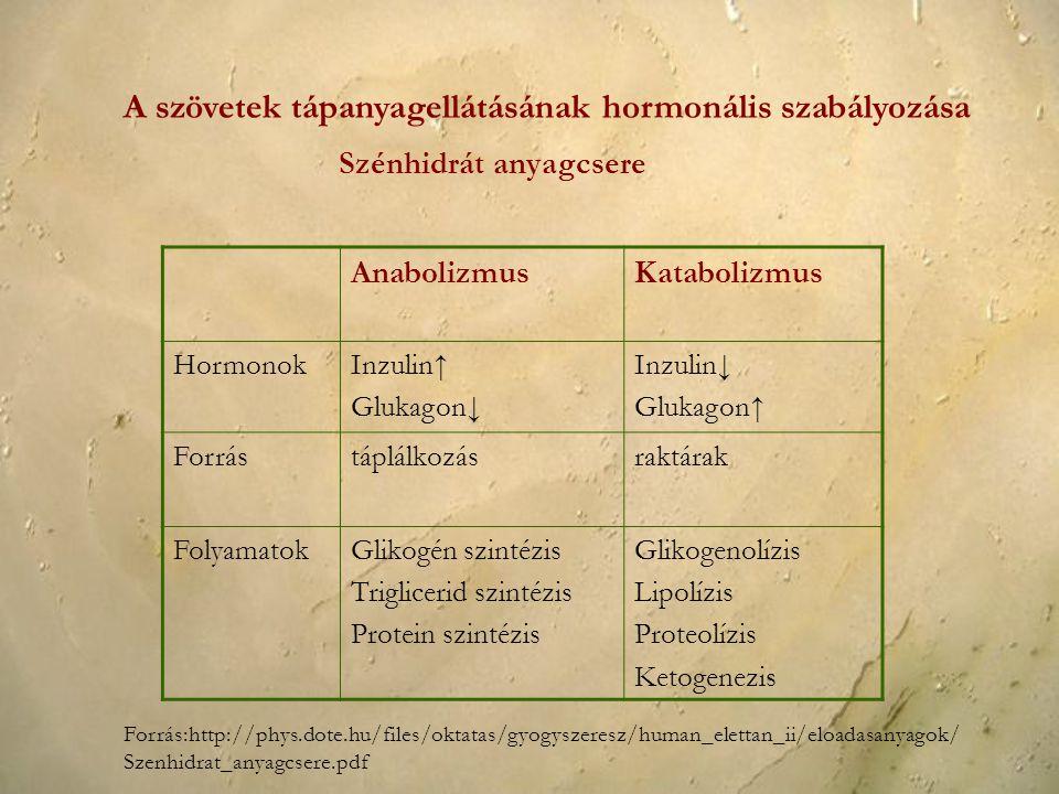 AnabolizmusKatabolizmus HormonokInzulin↑ Glukagon↓ Inzulin↓ Glukagon↑ Forrástáplálkozásraktárak FolyamatokGlikogén szintézis Triglicerid szintézis Pro