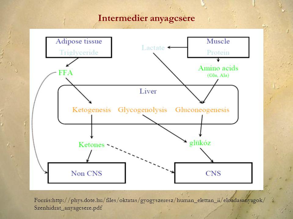 Forrás:http://phys.dote.hu/files/oktatas/gyogyszeresz/human_elettan_ii/eloadasanyagok/ Szenhidrat_anyagcsere.pdf Intermedier anyagcsere